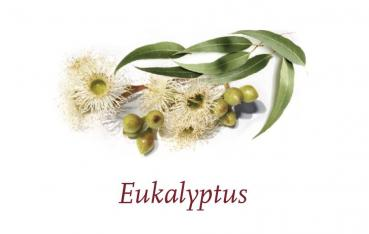 Scented Cubes Duft Eukalyptus