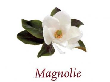 Scented Cubes Duft Magnolie