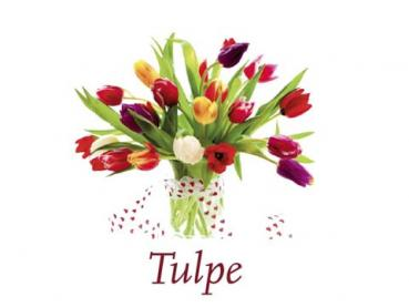 Scented Cubes Duftwachs Tulpe