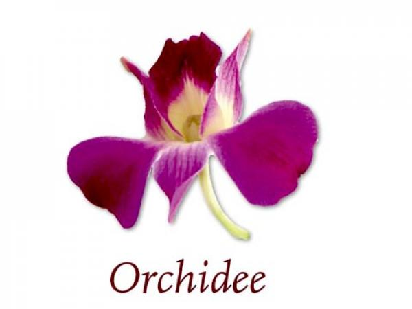 Scented Cubes Duftwachs Orchidee