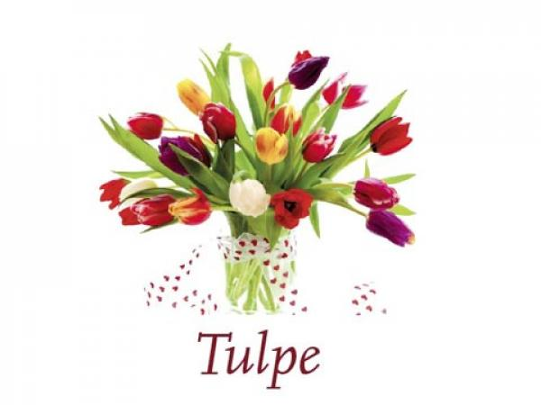 Scented Cubes Duft Tulpe